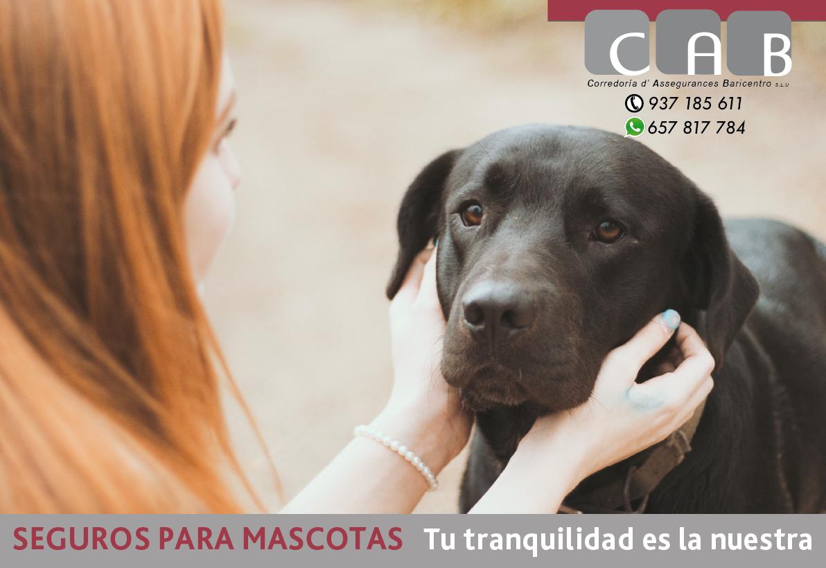 Seguros para Mascotas - CAB Correduría Seguros Baricentro - Photo by Taylor Bryant on Unsplash