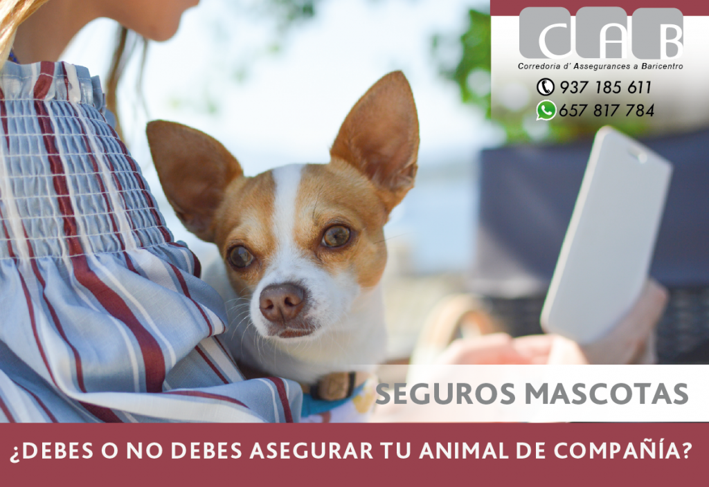 SEGUROS MASCOTAS - CAB Correduría Seguros Baricentro - Photo by Pete Bellis on Unsplash
